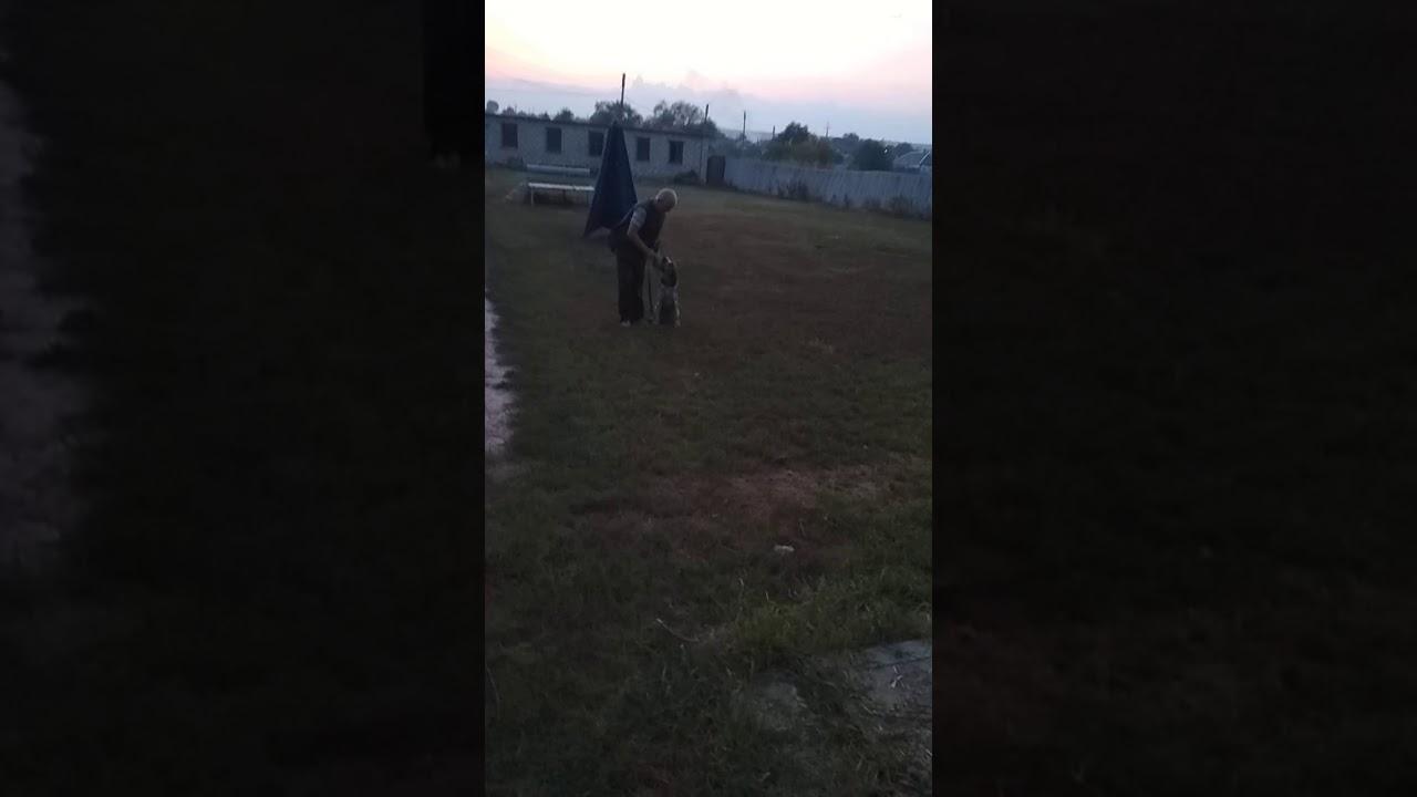 Чап щенок Дратхаара ч.3