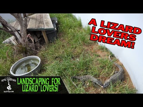 LANDSCAPING FOR LIZARD LOVERS!
