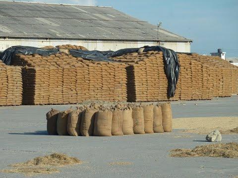 GOVT OF INDIA AGRICULTURE FOOD STORAGE DEPOT FCI GODOWNS VIS