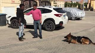 الكلب الشرس يحراس اى شيىءمدرسةكابتن عبد الكريم لتدريب الكلاب 01003634376