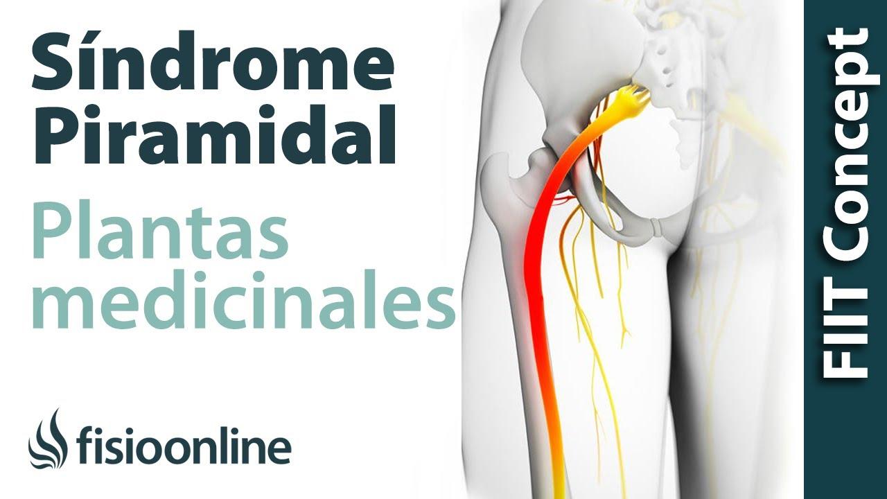 tratamiento de la prostata con plantas medicinales