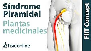 Plantas medicinales y remedios naturales para el síndrome piramidal derecho por próstata