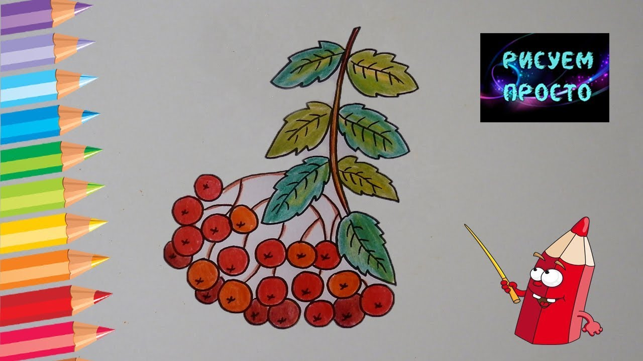 Как ПРОСТО нарисовать РЯБИНУ/497/How EASY to draw a ROWAN