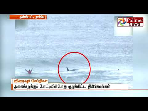 Killer Whales attacked during Norwegian surf contest | Polimer News