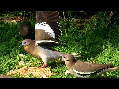 'Feeding The Birds' A Video for Cats  20mins