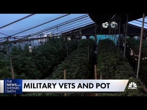 Download Veterans push for marijuana reform
