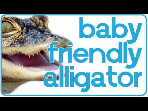 Baby, The Friendly Alligator