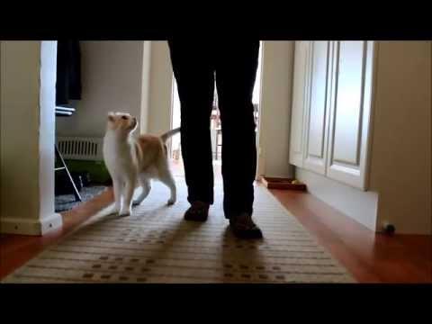Cat trick: Leg weaving