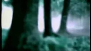 SHAKAPONK - Sonic