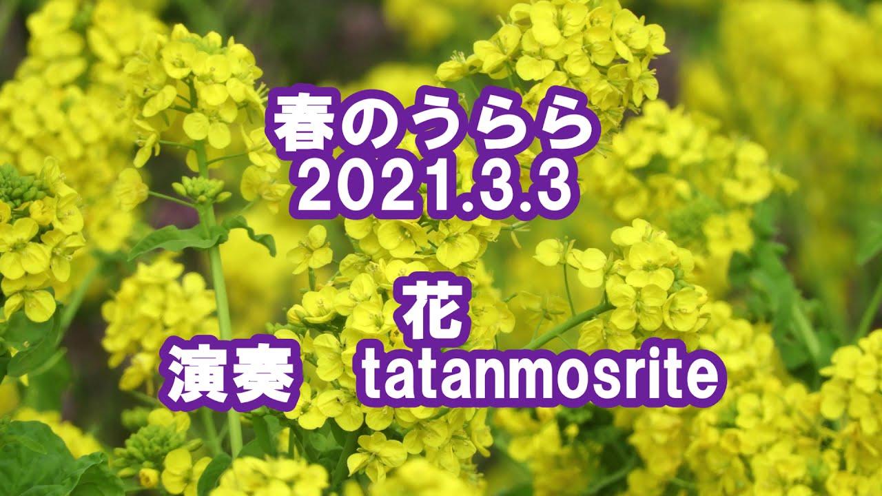 春のうらら(2021.3.3)