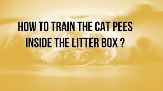 How to train the cat pees inside the litter box