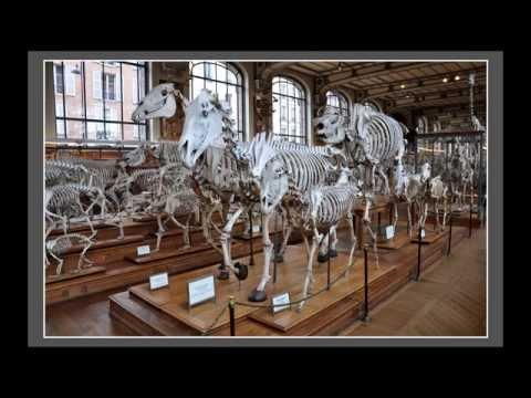 Jacques Liardot - Muséum national d'histoire naturelle de Paris