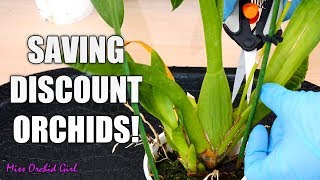 Rejuvenating stressed Oncidium Orchids + Detailed explanations for each step!