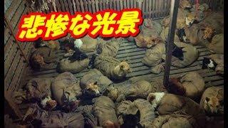 目の前に広がった悲惨な光景、そこから救われた犬達の新たな... thumbnail