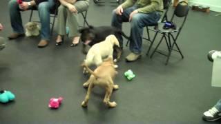 Maya's First Puppy Class
