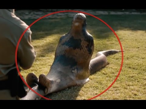 GIANT SNAKE EATS MAN ALIVE ANACONDA SWALLOWS MAN WHOLE ...