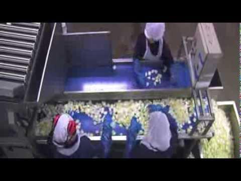 Finis onion processing machinery