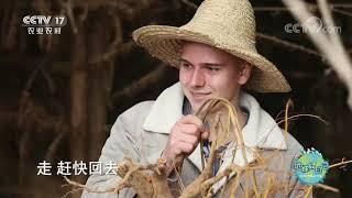 《地球村日记》 20200605 福建省三明市 第二天|CCTV农业