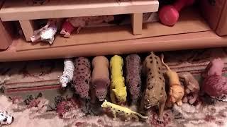 Моя коллекция диких кошек