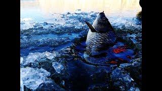 Зимова риболовля. Перший лід 2018 ЛОВЛЯ ВЕЛИКОГО КАРАСЯ