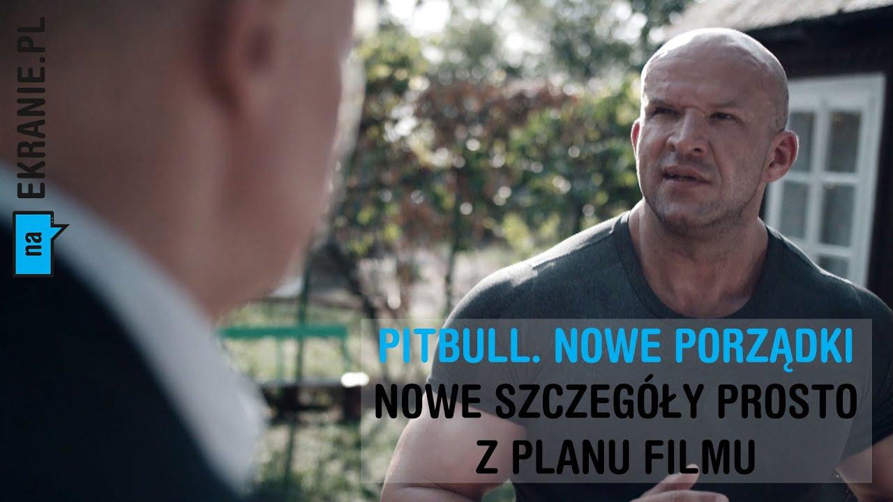 Pitbull Nowe Porzadki Wiele Ciekawych Informacji Youtube