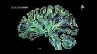 Влияние токсоплазмы и других микроорганизмов на психику человека и животных
