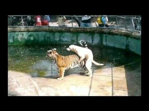 Pets and Animal