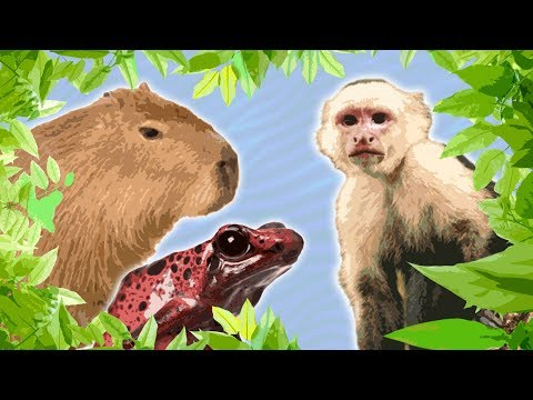 10 Jungle Animals For Kids || Amazon Animals For Kids || South American Animals