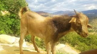 Mussie Shakur - Weyane (ወያነ) - New Ethiopian Tigrigna