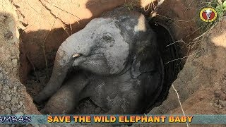 RESCUE BABY WILD ELEPHANT FROM WELL (Short)