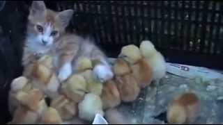 Веселые и смешные котята и утята.