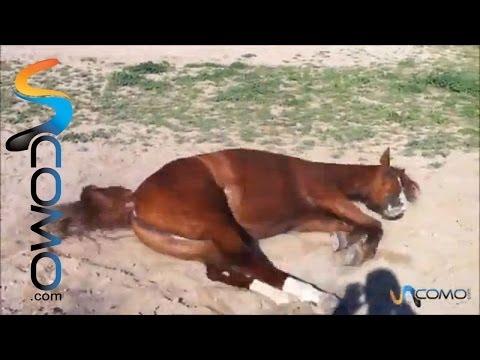 caballo-revolcandose