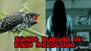 Download lagu PENAKUT DILARANG MENDENGARKAN SUARA BURUNG INI 👻