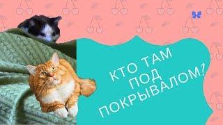 Мейн кун и сноу шу. Кто там под покрывалом? Кошачий детектив! Расследование ведет рыжий кот!