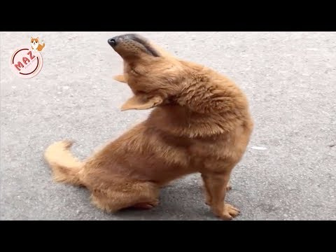 Tik Tok Dog, Cat, Animals - Cute Funny Pets Videos #23