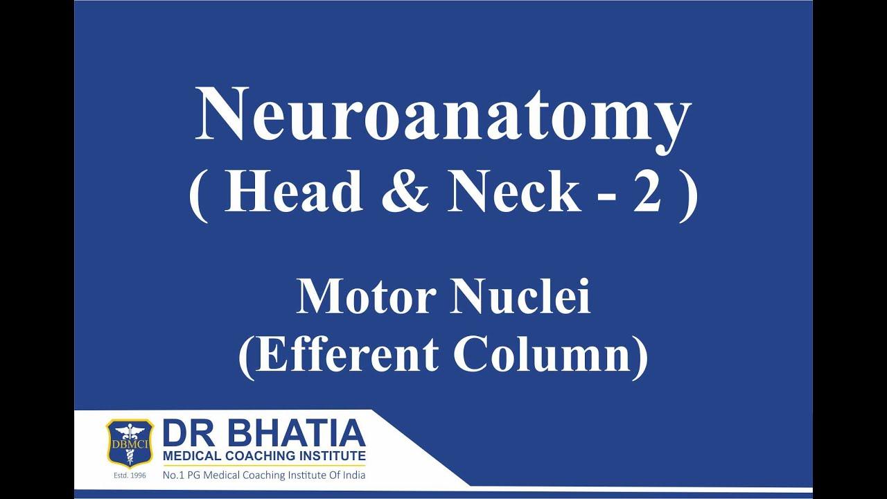 DBMCI- Dr. Ashwani Kumar- Neuroanatomy (Head & Neck-2)- AIIMS, PGI ...
