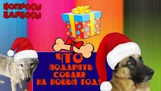 Что подарить собаке на новый год?
