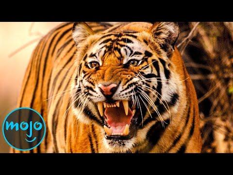 Top 10 Deadliest Animals in History
