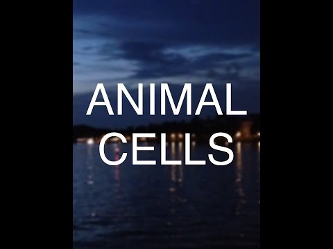 Animal Cell (parts and functions)