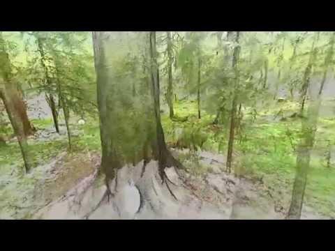"Terrestrial Laser Scanning of a ""Plenterwald"" Forest in Southwest Germany (Mute Version)"
