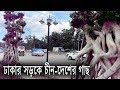 Airport Road Dhaka II Bonsai Tree Imported from China for Beautification