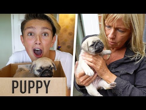 SURPRISING MORGZ WITH NEW PUPPY!! **he cried** (NOT Clickbait)