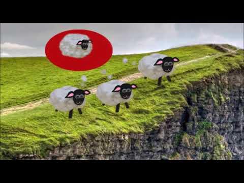 Les moutons blancs, Mélyne.