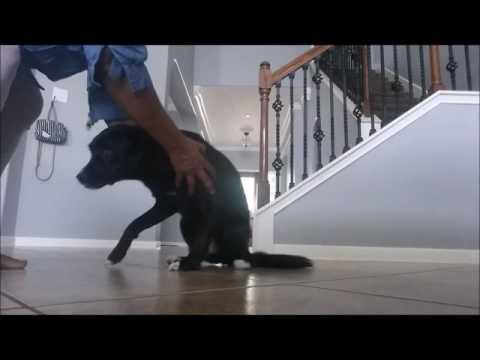 Best Treat based training - Puppy-dog Training