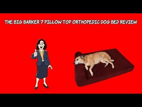 best-orthopedic-dog-bed-for-large-breed-⭐-big-barker-7-pillow-top-orthopedic-dog-bed-review