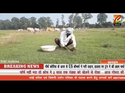 बहराइच के राजकीय गव शाला के बिछीया मे गायों सारे दावे हवाहवाई....