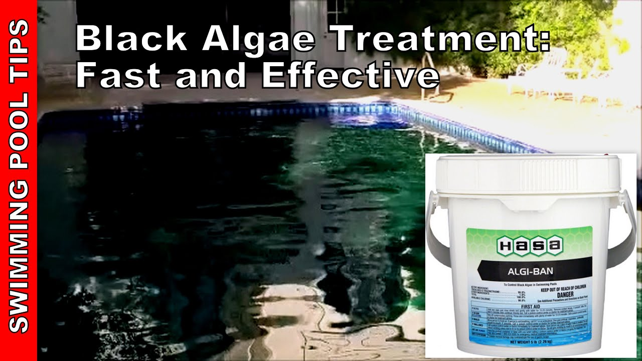 Black algae treatment get rid of black algae in your pool youtube for Black spots in the swimming pool