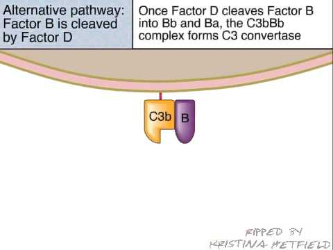 The Alternative Pathway of Complement Activation