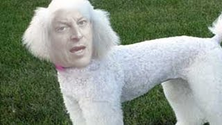 Police re-open investigation into Al Gore sex poodle claims