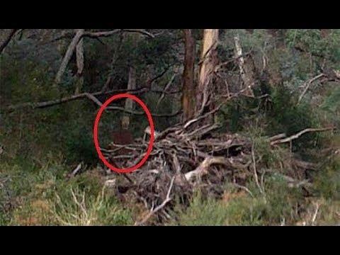 Призрак солдата в лесу